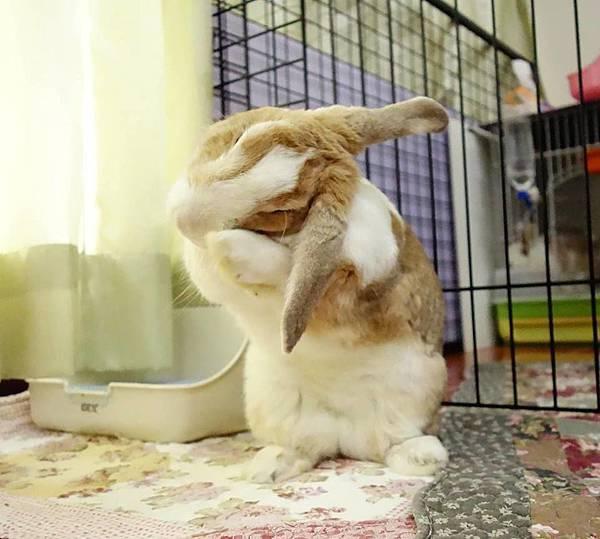 rabbit1228