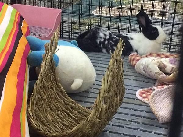 rabbit1394