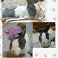 rabbit1074