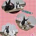 rabbit1370