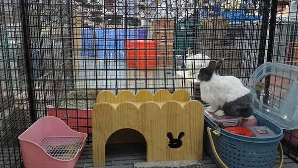 rabbit1045