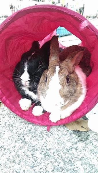 rabbit1163