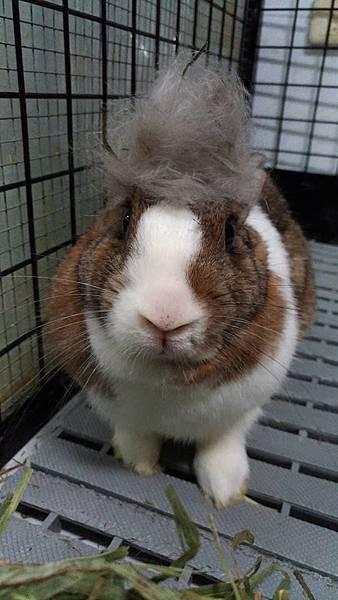 rabbit1297