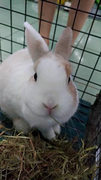 rabbit1400