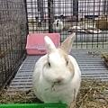 rabbit1399