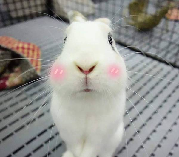 rabbit1223