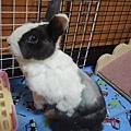 rabbit1073