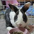 rabbit1214