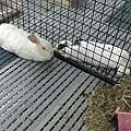 rabbit1049