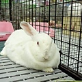 rabbit1052