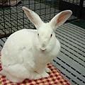 rabbit1078