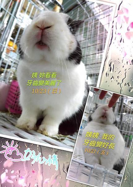 rabbit1015