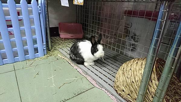 rabbit1216