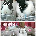 rabbit1336