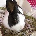 rabbit1302