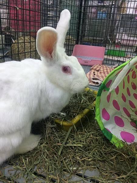 rabbit1392