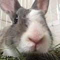 rabbit1110