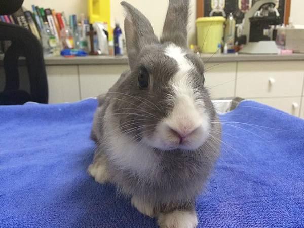 rabbit1201