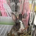 rabbit1253