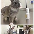 rabbit1076
