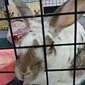 rabbit1042