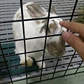 rabbit1296