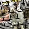 rabbit1144