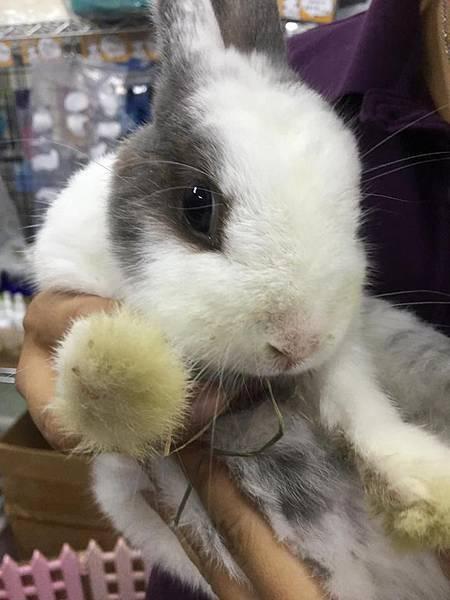rabbit1271