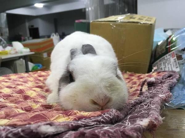 rabbit1237