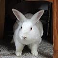 rabbit1066