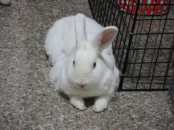 rabbit1212