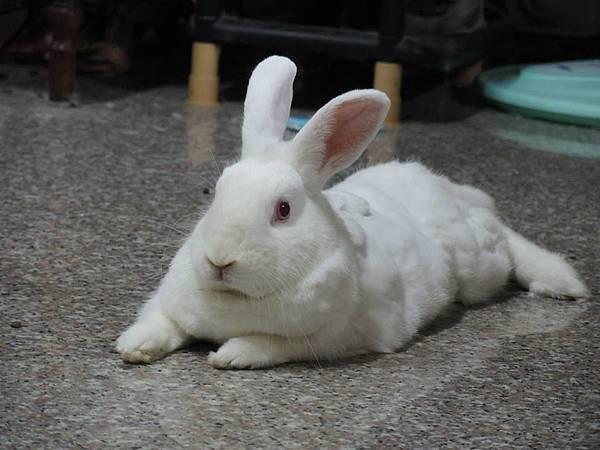 rabbit1094