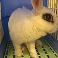 rabbit1386