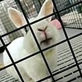 rabbit1325