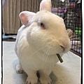 rabbit1380