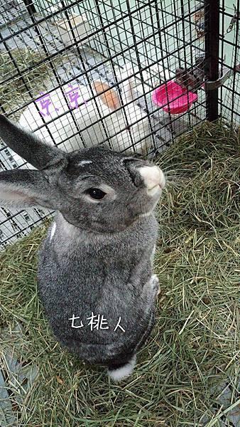 七桃人%26;京京.jpg