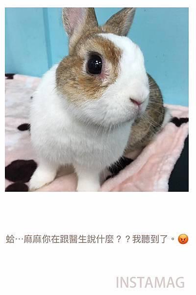 (23)_3_小乖.jpg