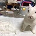 (19)_1_小茉莉.jpg