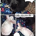(19)Oochi (烏漆麻黑).jpg