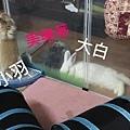 (27)小羽 &美樂蒂.jpg