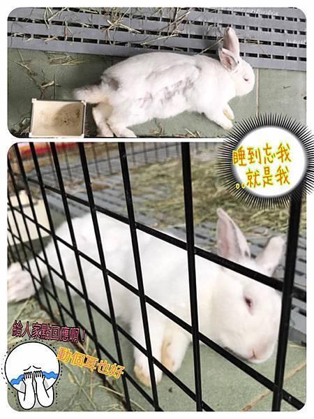 (27)小饅頭.jpg