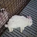 (4)洗手乳&喜羊羊:.jpg