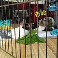 (23)布昤 &橋安 僑福.jpg