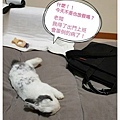 寶可夢10.jpg