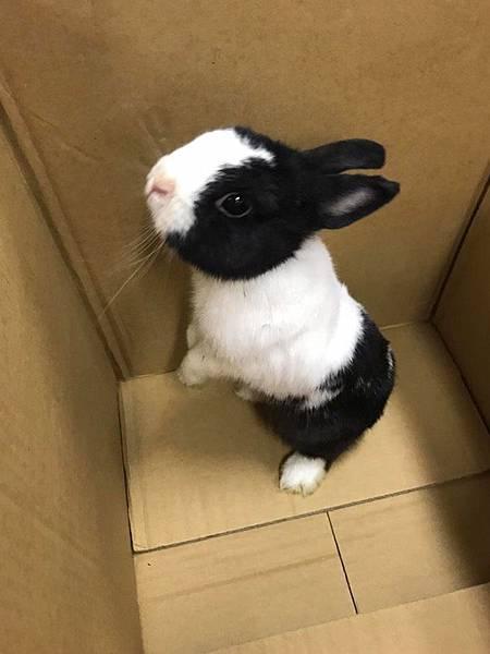 兔兔照.jpg