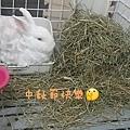 (41)小妮子.jpg
