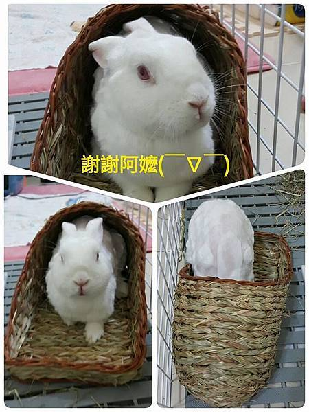 (45)小妮子.jpg