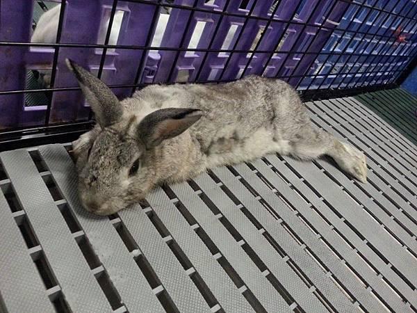 rabbit5348.jpg
