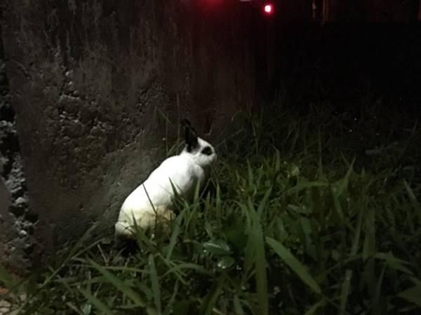 發現兔的地點(永和河堤橫移門內草叢)2.jpg