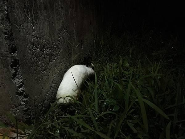 發現兔的地點(永和河堤橫移門內草叢).jpg